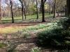 Central Park too