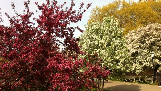 Crabapple Grove, Riverside Park